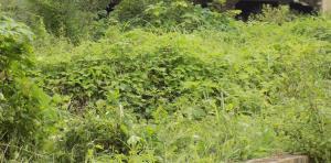 Land for sale Oluyole Area Oluyole Oyo