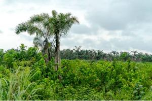 2 bedroom Mixed   Use Land Land for sale Shapati, Lekki Eleko Ibeju-Lekki Lagos
