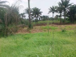 Commercial Land Land for sale Along the express at Umunede, close to Asaba Aniocha South Delta