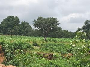 Residential Land Land for sale Behind Efab Queens Estate  Karsana Abuja