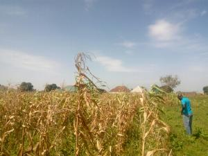 Land for sale by yakowa new road Chikun Kaduna
