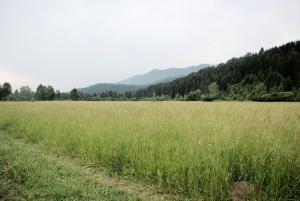 Land for sale ofada village Kosofe/Ikosi Lagos - 0