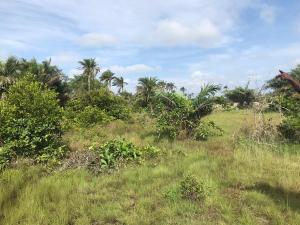 Mixed   Use Land Land for sale Itamaru village Eleko Ibeju-Lekki Lagos - 11