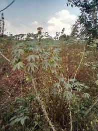 Residential Land Land for sale Agu Awka Town Awka South Anambra