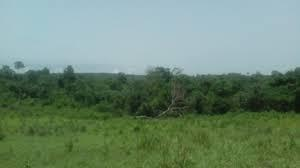 Land for sale Ido Oyo