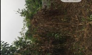 Residential Land Land for sale - Eliozu Port Harcourt Rivers