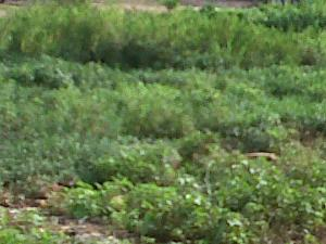 Land for sale Ajao Estate Isolo. Lagos Mainland Ajao Estate Isolo Lagos