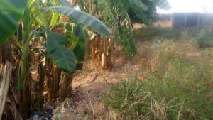 Mixed   Use Land Land for sale Off NSTV Road Tunga Minna Niger State Shiroro Niger