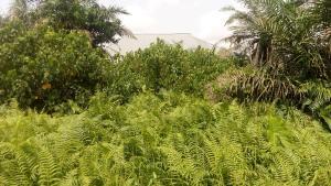 Residential Land Land for sale Akesan igando Akesan Alimosho Lagos