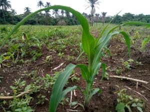 Mixed   Use Land Land for sale Kobape Abeokuta Ogun