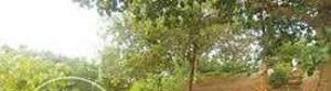 Land for sale Wuse II, Abuja Wuse 2 Abuja