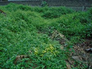 Land for sale ikorodu road,by jibowu  Jibowu Yaba Lagos