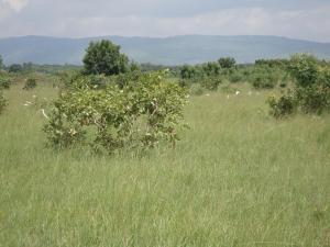 Land for sale Odo-Ona Elewe Alabata Road Ibadan Oyo State Ibadan Oyo - 1