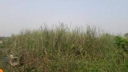 Residential Land Land for sale besides green spring school, along the road Awoyaya Ajah Lagos