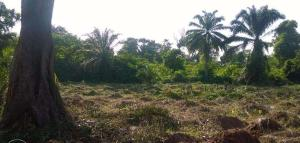 Land for sale Enugu East, Enugu, Enugu Enugu Enugu - 0