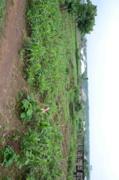 Mixed   Use Land Land for sale Oguro, Igbe Ikorodu Ikorodu Lagos