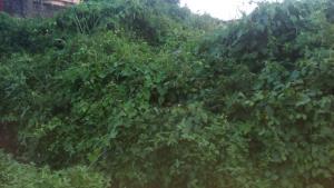 Land for sale Alagbaka, extension  Akure Ondo