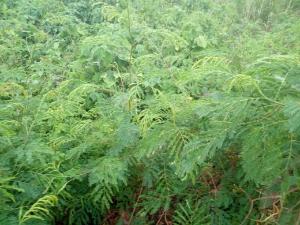 Land for sale Omi Apata Ibadan Oyo