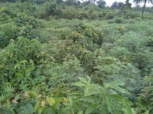 Land for sale Omagwa Ikwerre Rivers