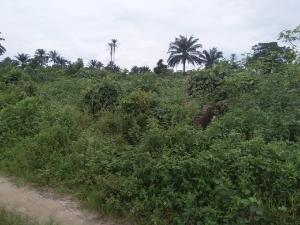 Land for sale umuchiorlu Aluu Ikwerre Rivers