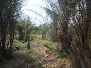 Commercial Property for sale Oron Road, Uyo Uyo Akwa Ibom