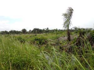 Residential Land Land for sale Orimedu Town Ibeju Lekki. Orimedu Ibeju-Lekki Lagos