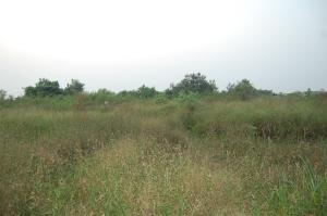 Serviced Residential Land Land for sale Close to Funai Abakaliki Ebonyi