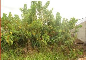 Land for sale 34 Dele Ojo Etate Street, Abule Egba road.New Oko Oba, Ifako Ijaiye Lagos  Abule Egba Abule Egba Lagos