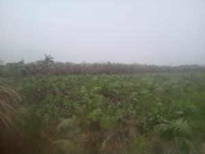 Serviced Residential Land Land for sale Isuaniocha Awka Anambra State Awka North Anambra