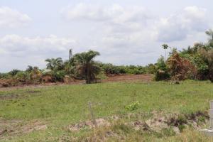 Commercial Land Land for sale NKUBOR, VILLAGE, EMENE,  CAPITAL TERRITORY Enugu Enugu