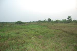 Serviced Residential Land Land for sale Before La campagne  Free Trade Zone Ibeju-Lekki Lagos