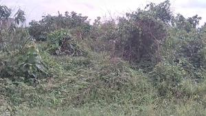 Land for sale Express road, Umuosi Oyigbo Rivers