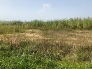 Serviced Residential Land Land for sale Northern Forshore estates  Lekki Phase 2 Lekki Lagos
