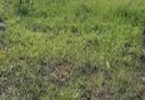 Residential Land Land for sale Off Monastery Road Lekki Lagos