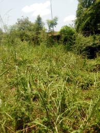 Land for sale amuwo odofin Amuwo Odofin Amuwo Odofin Lagos - 0