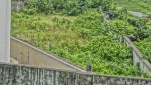 Land for sale Fola Daniels Close off Hakeem Dickson Street Lekki Phase 1 Lekki Lagos