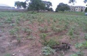 Land for sale Isuaniocha Awka North Anambra - 0