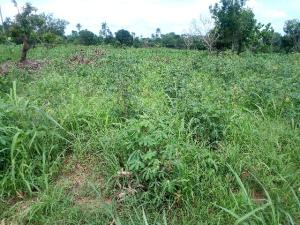 Commercial Land Land for sale Sede street, Ibie-Auchi road, Jattu Etsako East Edo