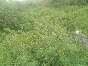 Land for sale veora estate Arepo Arepo Ogun - 0