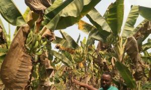 Mixed   Use Land Land for sale Jehus Farms Estate, Abule Ojo, Ipara-remo,  Obafemi Owode Ogun