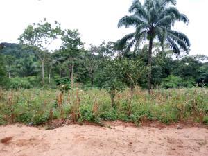 Residential Land Land for sale Ezimezi Amawbia. Awka South Anambra