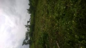 Land for sale Oko-Omi Ota-Idiroko road/Tomori Ado Odo/Ota Ogun