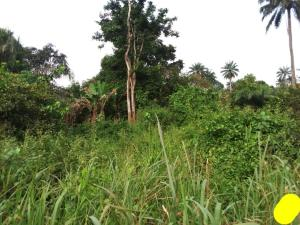 Land for sale sawmill area iseyin saki road with stable light meters from expressway  Iseyin Oyo