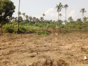 Land for sale 2 Mins drive to Lacampaigne Tropicana LaCampaigne Tropicana Ibeju-Lekki Lagos - 7