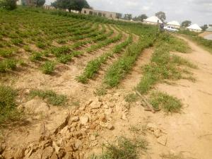 Land for sale mahuta,kaduna Kaduna South Kaduna - 0