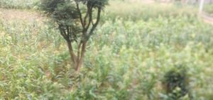 Land for sale Enugu South, Enugu, Enugu Enugu Enugu - 0