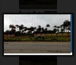 Land for sale Along Aba-Owerri road in Ngo-okpala community,Owerri Nortn LGA Ngor-Okpala Imo - 2