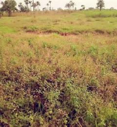 Residential Land Land for sale nkanu east Nkanu Enugu