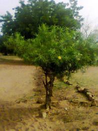 Land for sale Sabo area Oyo Oyo