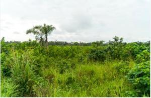 2 bedroom Mixed   Use Land Land for sale Abule Ado (Festac Extension) Area Ojo Ojo Lagos